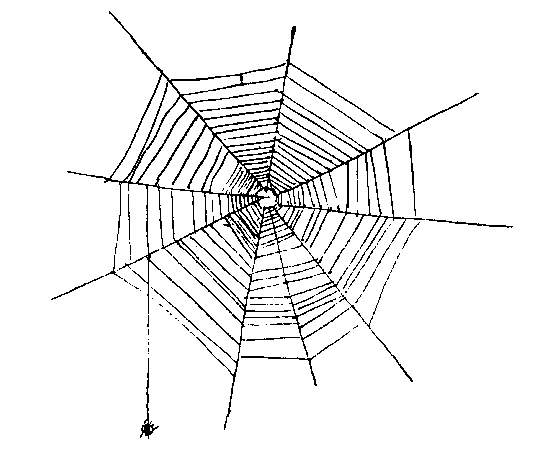 thesis statement for a noiseless patient spider